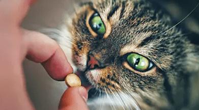 zithromax für katzen